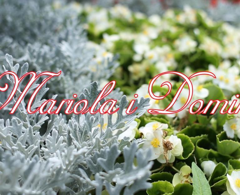 Teledysk ślubny Mariola i Dominik